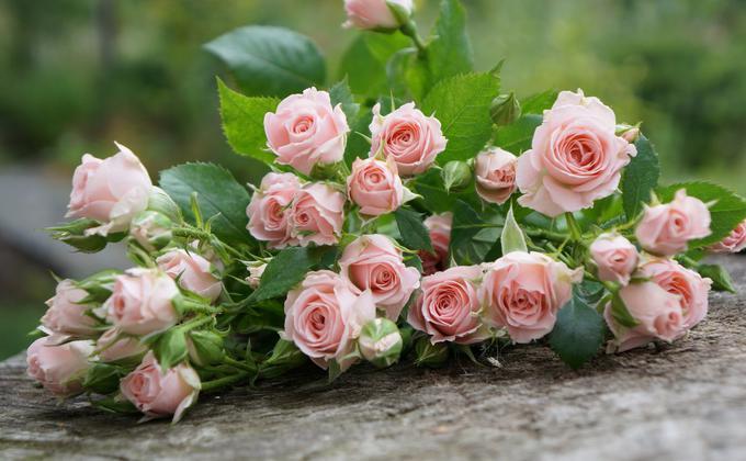 中国花卉今年受到武汉肺炎疫情的冲击,价格大幅下跌,有云南花农一天含泪销毁超过百万支玫瑰花,最热门的情人节礼物也被口罩和蔬菜取代。(图片来源:Unsplash)